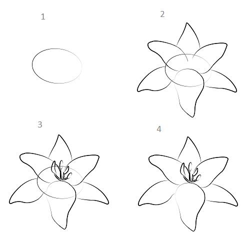Cách vẽ hoa ly chỉ với vài bước đơn giản - Ảnh 1