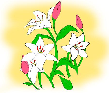 Cách vẽ hoa ly chỉ với vài bước đơn giản - Ảnh 4