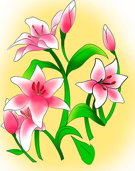 Cách vẽ hoa ly chỉ với vài bước đơn giản - Ảnh 5